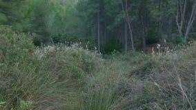 Floresta bonita na mola com campos de trigo pequenos video estoque