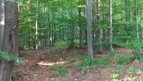 Floresta bonita na montanha no verão video estoque