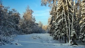 Floresta bonita na neve, Rússia Fotos de Stock