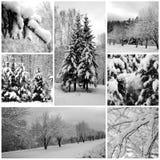 Floresta bonita, pinhos do inverno fotografia de stock royalty free