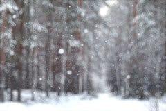 Floresta borrada do inverno do fundo Fotografia de Stock Royalty Free