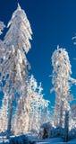 Floresta branca da neve Imagens de Stock Royalty Free