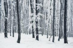 Floresta branca do inverno Fotografia de Stock Royalty Free