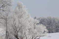 Floresta branca geada Fotografia de Stock