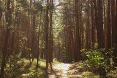 Floresta brilhante Fotos de Stock Royalty Free