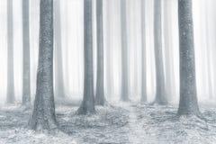 Floresta brilhante bonita com névoa foto de stock royalty free