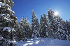 Floresta cênico do inverno foto de stock royalty free