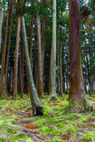 Floresta cênico perto de Lago de Furnas, os Açores Fotos de Stock Royalty Free