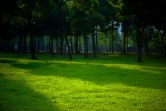 Floresta calma Fotografia de Stock Royalty Free