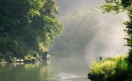 Floresta calma com luz solar Fotos de Stock Royalty Free