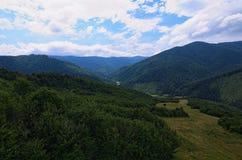 Floresta Carpathian antes da noite chuvosa Ajardine com florestas e montanhas do pinho no verão Foto de Stock Royalty Free