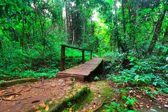 Floresta chuvosa imagens de stock royalty free