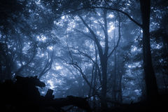 Floresta chuvosa enevoada assustador Fotos de Stock