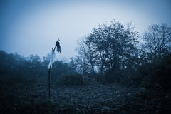 Floresta chuvosa enevoada assustador Foto de Stock