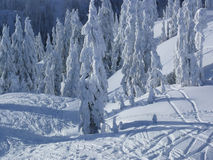 Floresta coberta com a neve Fotografia de Stock