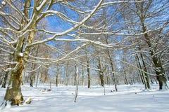Floresta coberta com a neve em Opakua Fotos de Stock Royalty Free