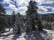 Floresta coberto de neve bonita imagem de stock royalty free