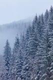 Floresta coberto de neve do abeto Imagens de Stock