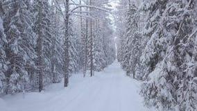 Floresta coberto de neve do inverno que move a câmera para a frente filme