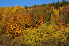 Floresta colorida Fotografia de Stock