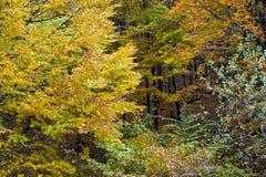 Floresta colorida Fotos de Stock