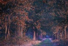 Floresta colorida bonita do conto de fadas na manhã imagens de stock royalty free