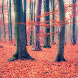 Floresta colorida do outono Fotografia de Stock
