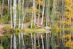 Floresta colorida do outono na costa do lago Fotos de Stock Royalty Free