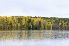 Floresta colorida do outono na costa do lago Fotos de Stock