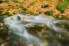 Floresta colorida outonal com corredeira pequena da angra Foto de Stock Royalty Free