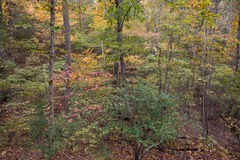 Floresta com Autumn Color Palette Foto de Stock