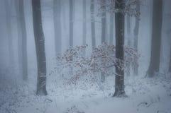 Floresta com névoa e neve no inverno Foto de Stock