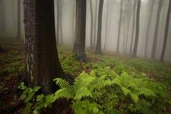 Floresta com planta e névoa do fern Imagem de Stock Royalty Free