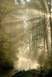 Floresta com raias do sol através das árvores Imagens de Stock