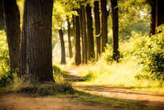A floresta como em um conto de fadas Fotografia de Stock