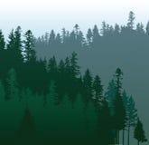 Floresta conífera Fotografia de Stock