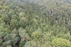 Floresta conífera Imagens de Stock Royalty Free