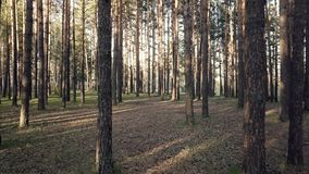 Floresta conífera em Sibéria filme