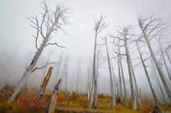Floresta conífera inoperante Imagem de Stock Royalty Free