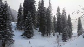 Floresta conífera no inverno video estoque