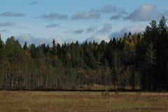 Floresta conífera no outono Um pântano no primeiro plano fotos de stock royalty free