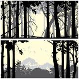 Floresta conífera selvagem Imagem de Stock Royalty Free