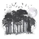 Floresta conífera selvagem ilustração stock