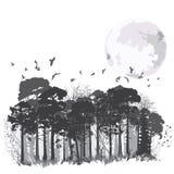 Floresta conífera selvagem ilustração royalty free