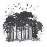 Floresta conífera selvagem ilustração do vetor