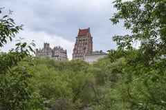 Floresta concreta da selva Imagens de Stock Royalty Free
