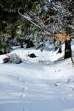 Floresta congelada Fotos de Stock