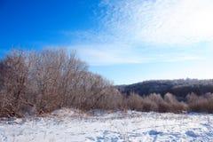 Floresta congelada Foto de Stock