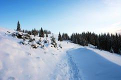 Floresta congelada Imagem de Stock Royalty Free