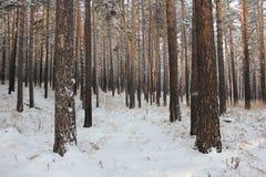 Floresta congelada Foto de Stock Royalty Free